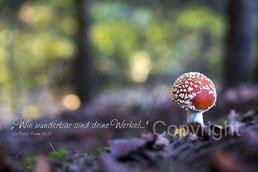Fliegenpilz im Wald
