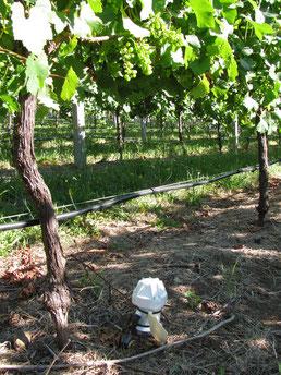 sonde Enviroscan dans le domaine viticole - distribuée par Agralis en Aquitaine