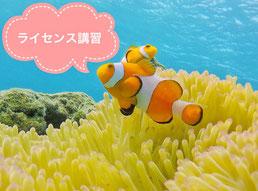 TAKUDIVE石垣島のライセンス講習ページ