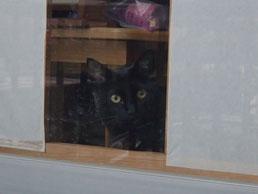 外を見ているロンちゃんをお外から見て