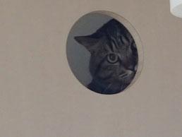 猫ちゃん小屋