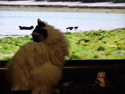 海を泳ぐ猫ちゃんたち