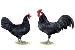 0,1 und 1,0 schwarz