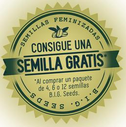 semillas marihuana gratis 2015 BIg Seeds Barcelona, promocion semilla marihuana gratis big seeds