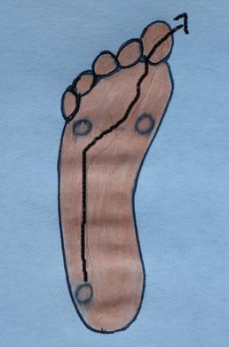Zeichnung einer Fußsohle mit Markierung der Abrollroute und den Belastungspunkten