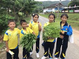 有機農業の活動で育てた空心 菜。たくさん収穫できました