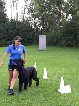 Antje und Ajani beim Rallye Obedience by agizwerg