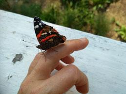Die Schilddrüse mit ihrer Schmetterlingsform steht für Kommunikation, Kreativität und Individualität
