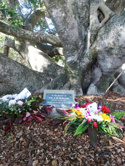 McIntyre memorial tree in Eumundi is an important focal point for ANZAC Day and Remembrance Day