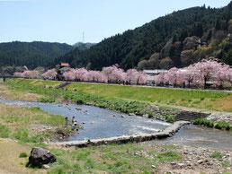 岡山県新庄村 がいせん桜まつり