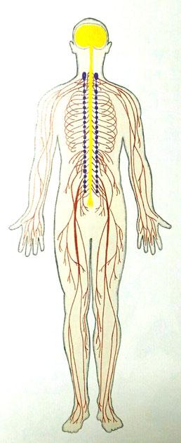 神経とカラダの関係