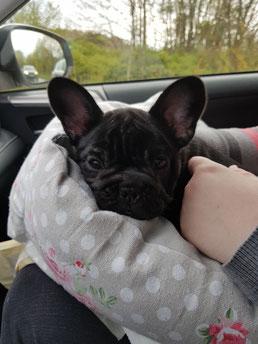 Leni auf ihrer Reise ins neue Zuhause.
