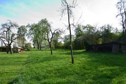 Übergang vom Wohngebiet mit gemähtem Rasen links zum Streuobstgebiet mit ungemähter Wiese.