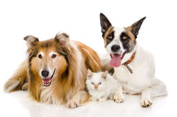 犬と猫が仲良く暮らす:多頭飼い