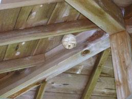 浮御堂にスズメバチの巣