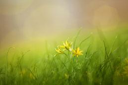 Frühlingsbeginn und Wintersonnenwende
