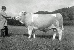 Sepp Ertl mit seinem teuren Rekord-2er-Stier (um 1975)