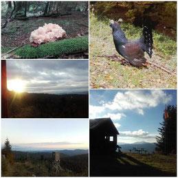 Bilder by Hannah