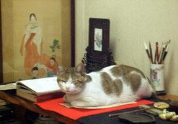 我が家の猫は文を愛する猫でありました。