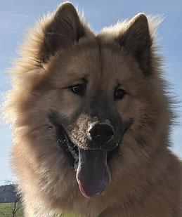 CHAPLIN als Junghund