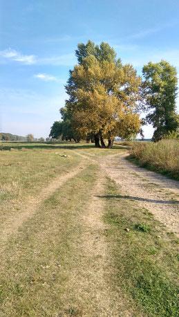 Spaziergang auf den Elbwiesen