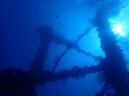 大物から沈船まで見れるパラオ