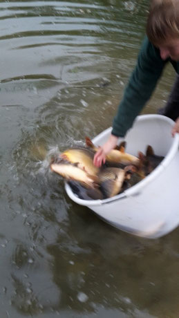 Fischbesatz Weiher/Donau