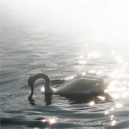 L'oiseau du lac