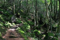 Forêt en Ariège
