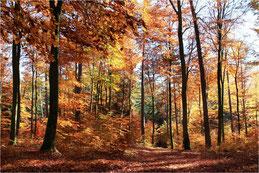 Forêt d'Alsace