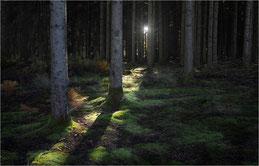 la forêt des sabbats en Morvan