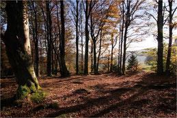 Clairière en Schwarzwald