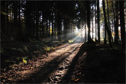 En forêt noire