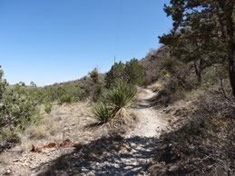 Guadalupe Mountains, McKittrick Canyon