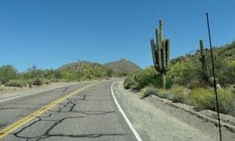 Fahrt zum Saguaro Lake
