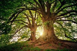 Baum, Erdung, Energiearbeit
