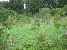 樹木や草花の力強さを感じる第一樹木葬地です