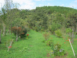 こちらも彼岸花が増えました。第二樹木葬地