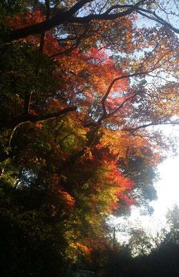 寺までの参道も紅葉が見事です。
