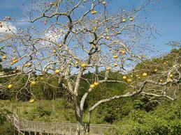 樹木葬地の柿も色づきました。