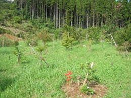 夏の花と秋の花が混ざり、春の次に色彩豊かな季節になりました。第三樹木葬地