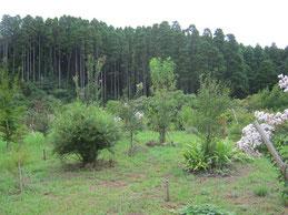 木々の成長を感じる第三樹木葬地です