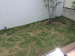 芝生 薬害