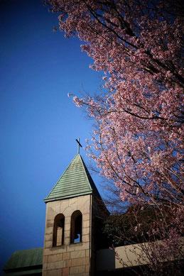 写真をクリックしてね。椿山荘の「桜Sensation」のページにJumpするよ!