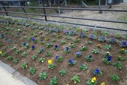 植え付けされた花壇