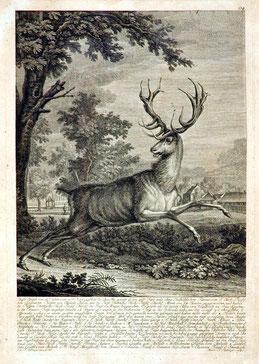 Johann Riedinger (1698 bis 1767): Springender Hirsch