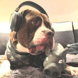 Hundetrainer Ausbildung FAQ