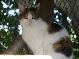 Katze Heidi