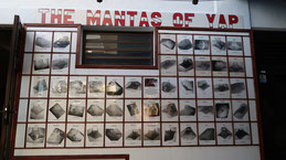 The mantas of Yap