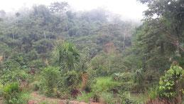 Manua Road